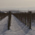 Thirteen inches of snow over the Armada Vineyard